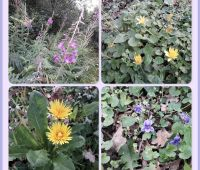 Picture of flowering plants