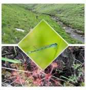 Collage of peat bog pictures