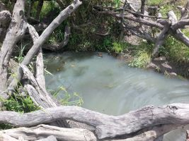 Unsafe water supply that is also used by animals in Ojolai Village